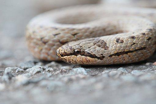 Snake, Animals, Reptile, Green, Jungle, Nature, Wild