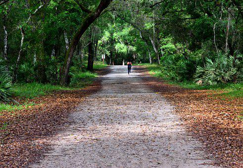 Woman, Jogger, Runner, Exercise, Pathway, State Park