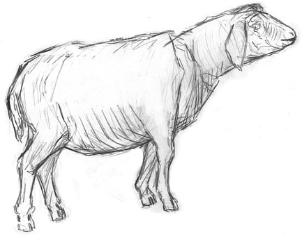 Sheep, Lamb, Animal, Livestock, Pet, Farm, Mammal