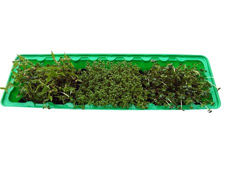 Seedlings, Radix, Grow, Germinate, Bio, Box, Isolated