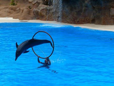 Dolphin, Jump, Artistry, Dolphin Show, Demonstration