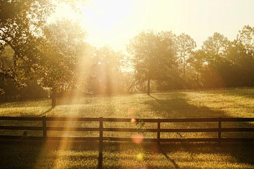 Day Break, Dawn, Sun, Light, Fence, Farm, Day, Morning