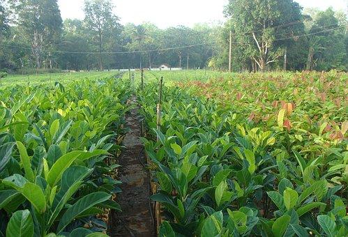 Nursery, Forest, Plants, Seedlings, Green, Forestry