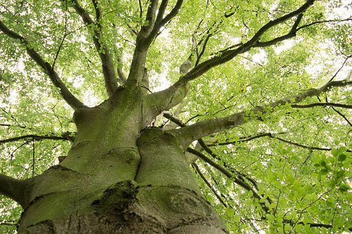 Tree, Green, Leaves, Forest, Log, Tree Bark, Branches