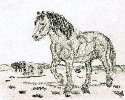 Drawing, Pencil Drawing, Horse, Hand Drawn Sketch