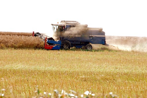 Rapsernte, Combine Harvester, Agriculture, Harvest
