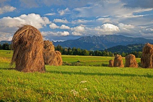 Hay, Poland, Podhale, Mountains, Tatry, Polish Tatras