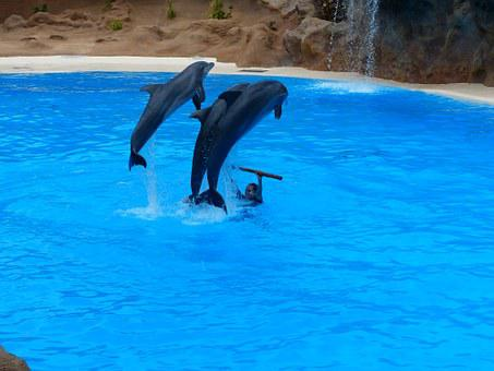 Dolphins, Jump, Artistry, Dolphin Show, Demonstration