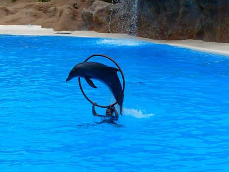 Dolphin, Jump, Ring, Jump Through, Artistry