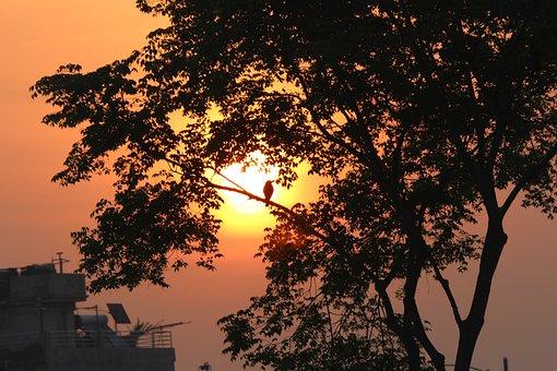 Dawn, Sunrise, Morning, One Tree, Daybreak