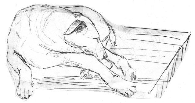 Dog, Sleep, Doze, Sleeping Dog, Pet, Lying, Lying Dog