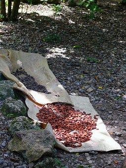 Coffee, Chocolate, Dominican, Republic, Nature