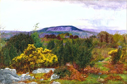 Daniel Williamson, Plants, Mountains, Spring, Bushes