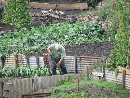 Gardening, Gardener, Vegetables, Garden, Nature, Spring