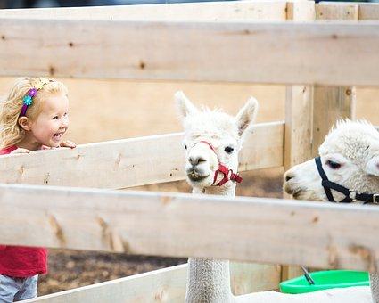 Llama, Kids, Cute, Nature, Young, Child, Mammal
