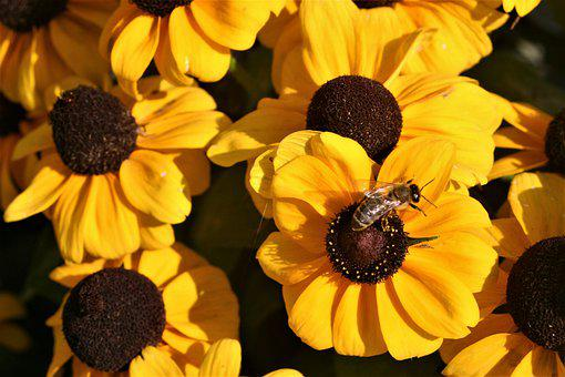 Yellow, Bee, Flower, Insect, Nature, Blossom, Bloom