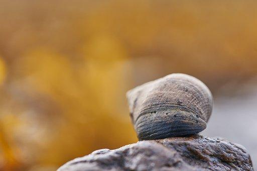 Snail, Shell, Stone, Mollusk, Gastropod, Snail Shell