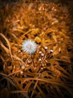Flower, Buds, Seeds, Weeds, Grass, Nature