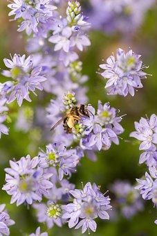 Flowers, Bee, Pollinate, Pollination, Purple Flowers