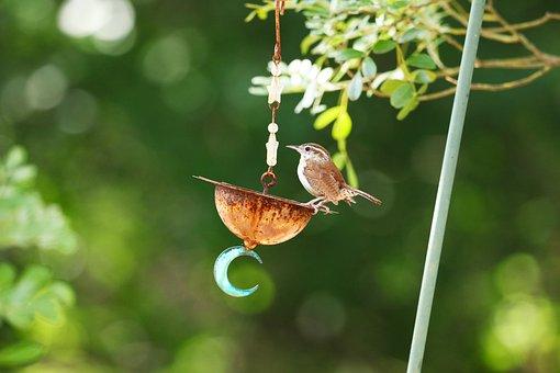Carolina Wren, Bird, Small, Wildlife, Yard Art, Brown