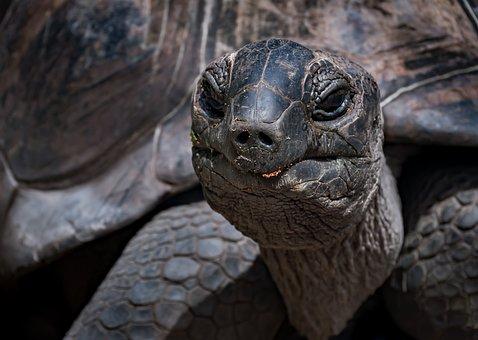 Turtle, Reptile, Tortoise, Wildlife, Animal, Fauna