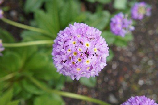 Flowers, Shrub, Bush, Spring, Garden, Botanical Garden