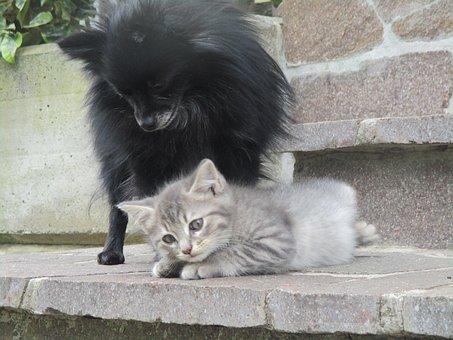 Dog, Animal, Cat, Puppies, Mammal, Friendship