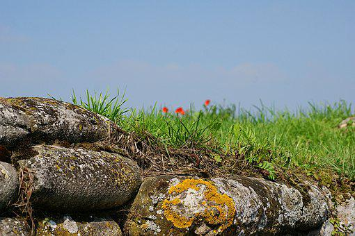 Rocks, Poppies, Flowers, Grass, Field, War, Trenches
