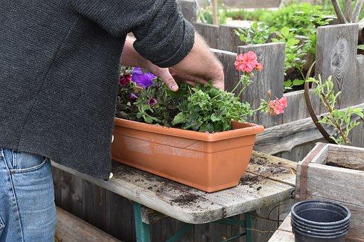 Flower Box, Planting, Garden, Plant Table, Flowers