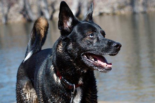Dog, Pet, Park, Grass, Animal, Happy, Cute, Canine