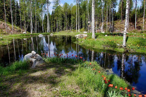 Tulips, Bank, Lake, Forest, Flowers, Plants, Grass