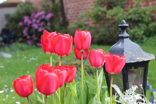 Tulips, Red Tulips, Flowers, Red Flowers, Bulb, Nature