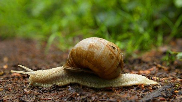 Snail, Mucus, Probe, Casing, Close Up