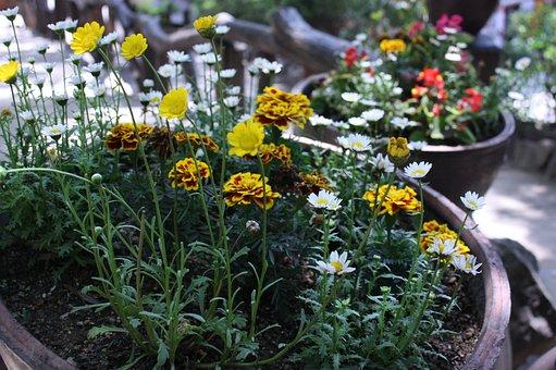 Flowers, Petals, Weeds, Soil, Pot, Potted Plants
