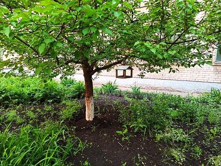 Tree, Green, Feeder For Birds, Ecology, Leaves, Spring