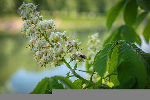 Flowers, Bee, Insect, Spring, Hummel, Summer, Plants