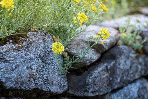 Flowers, Rocks, Weeds, Grass, Stone Garden, Nature