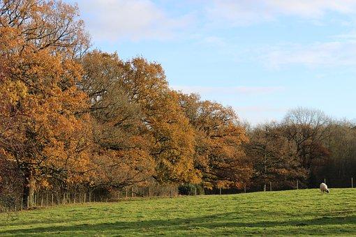 Landscape, Autumn, Nature, Fall, Trees, Mood, Season