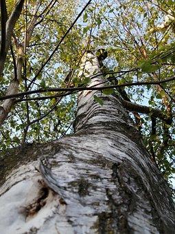 Tree, Trunk, Nature, Wood, Bark, Woods, Leaves, Foliage