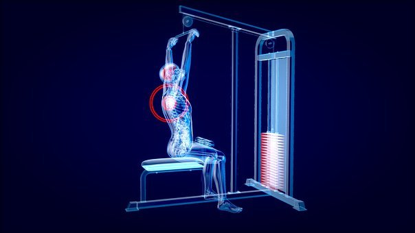 Bodybuilding, 3d, X-ray, Muscles, Muscular, Weights