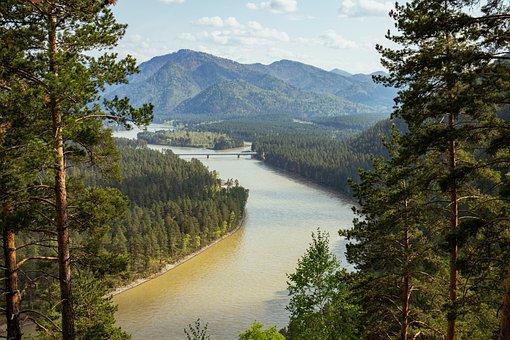 River, Mountains, Trees, Conifers, Coniferous