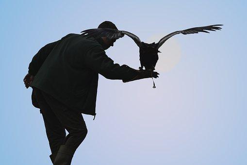 Bird Of Pray, Owl, Eagle, Animal Raptor, Wildlife
