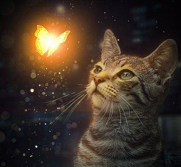 Cat, Butterfly, Glowing, Feline, Insect, Lepidoptera