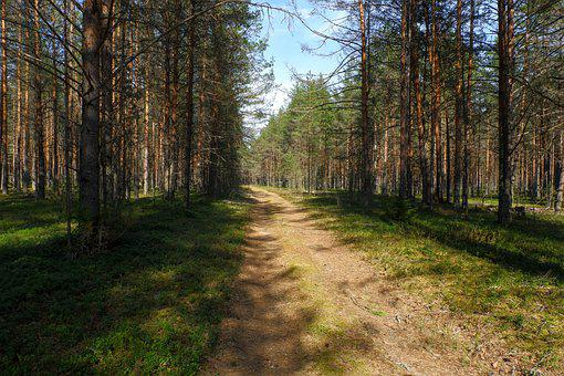 Forest, Trees, Path, Trail, Woods, Woodlands