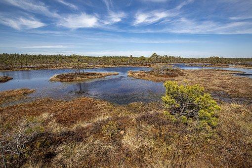 Swamp, Bog, Grass, Trees, Wetlands, Spring, Water