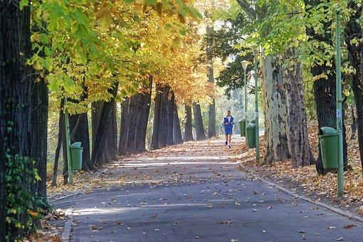Avenue, Man, Jogging, Autumn, Leaves, Foliage