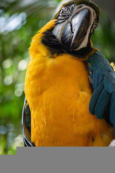 Macaw, Parrot, Bird, Zoo, Animal, Nature, Colorful
