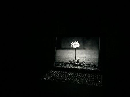 Laptop, Flower, Monochrome, Screen, Computer, Plant
