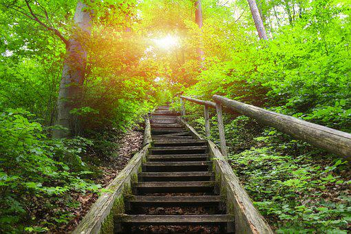 Forest, Jacob's Ladder, Stairs, Sunlight, Trees, Plants
