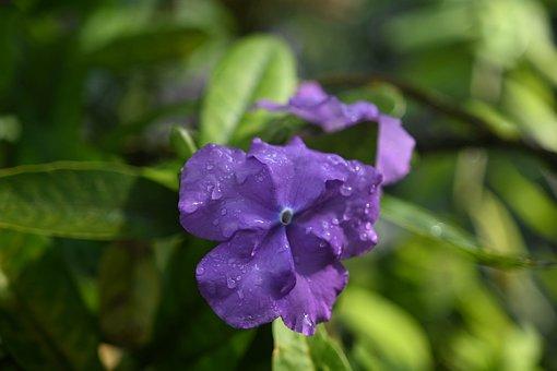 Flower, Purple Flower, Water Droplets, Raindrops
